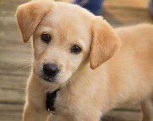 esa puppy