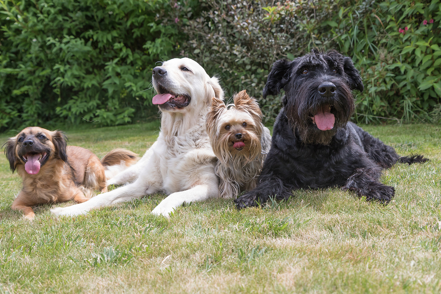 Which Dog Breed Will Suit You Best