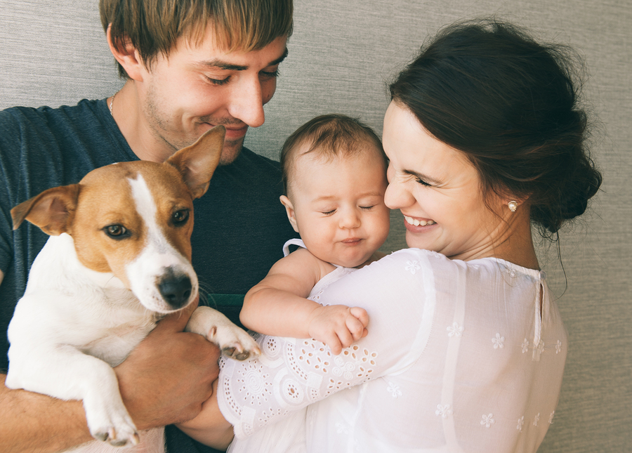 Learn The Top Ways Get Your Family's Approval For A Pet
