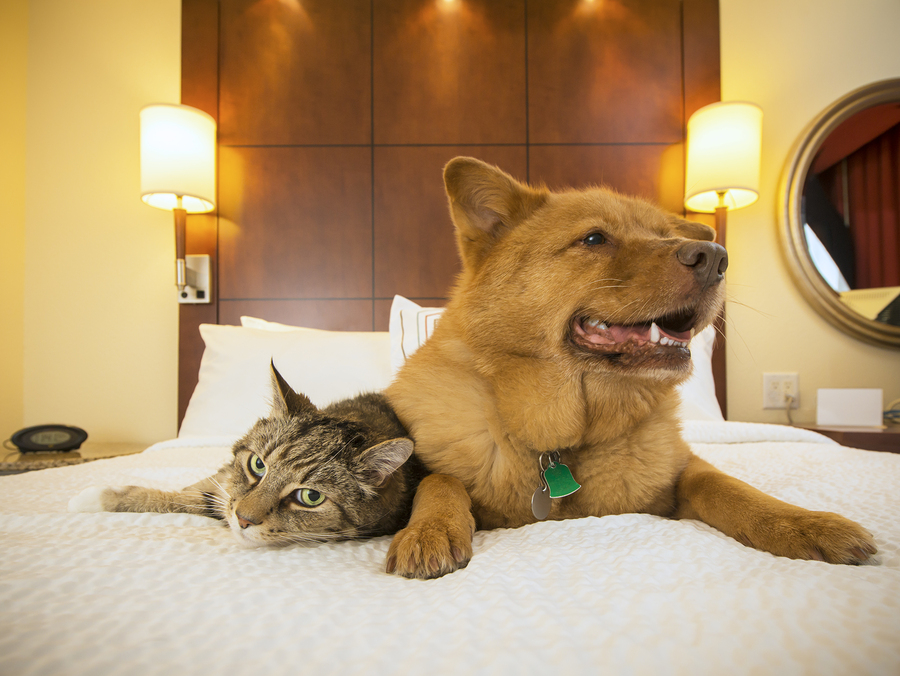 Esa Hotel Laws 2019 Can I Bring My Pet With Me Therapy Pet