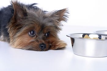 5 Signs That Your Dog Is Sick