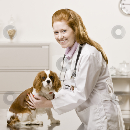 Learn How Many Times Your Dog Needs To See The Vet Per Year