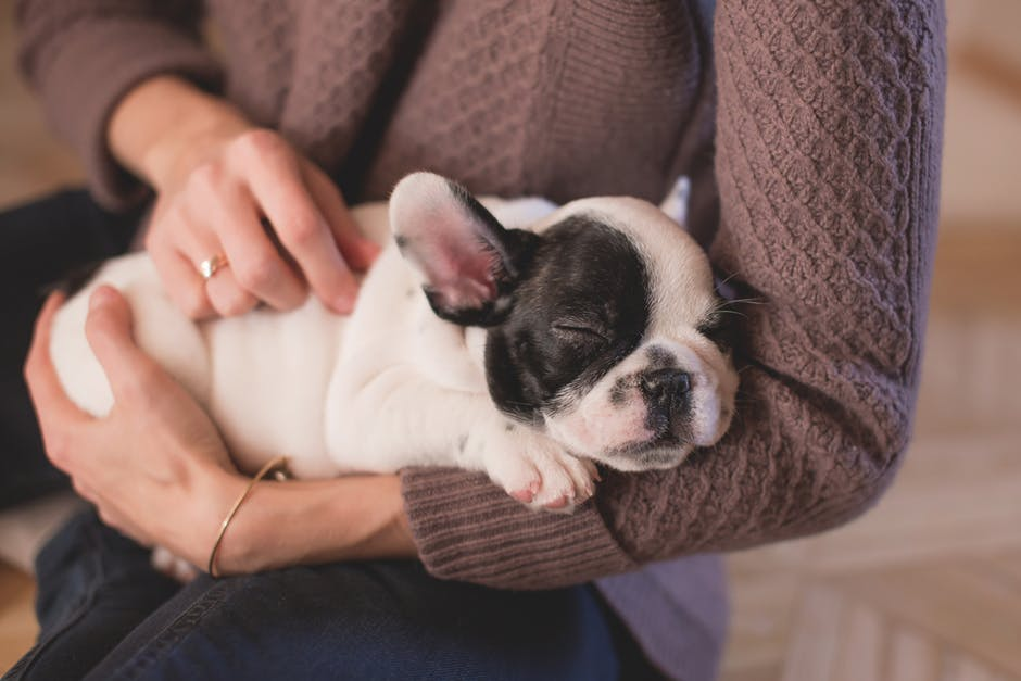 Quickly Find Out If Your Pet Is Having Separation Anxiety
