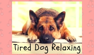 Tired dog relaxing
