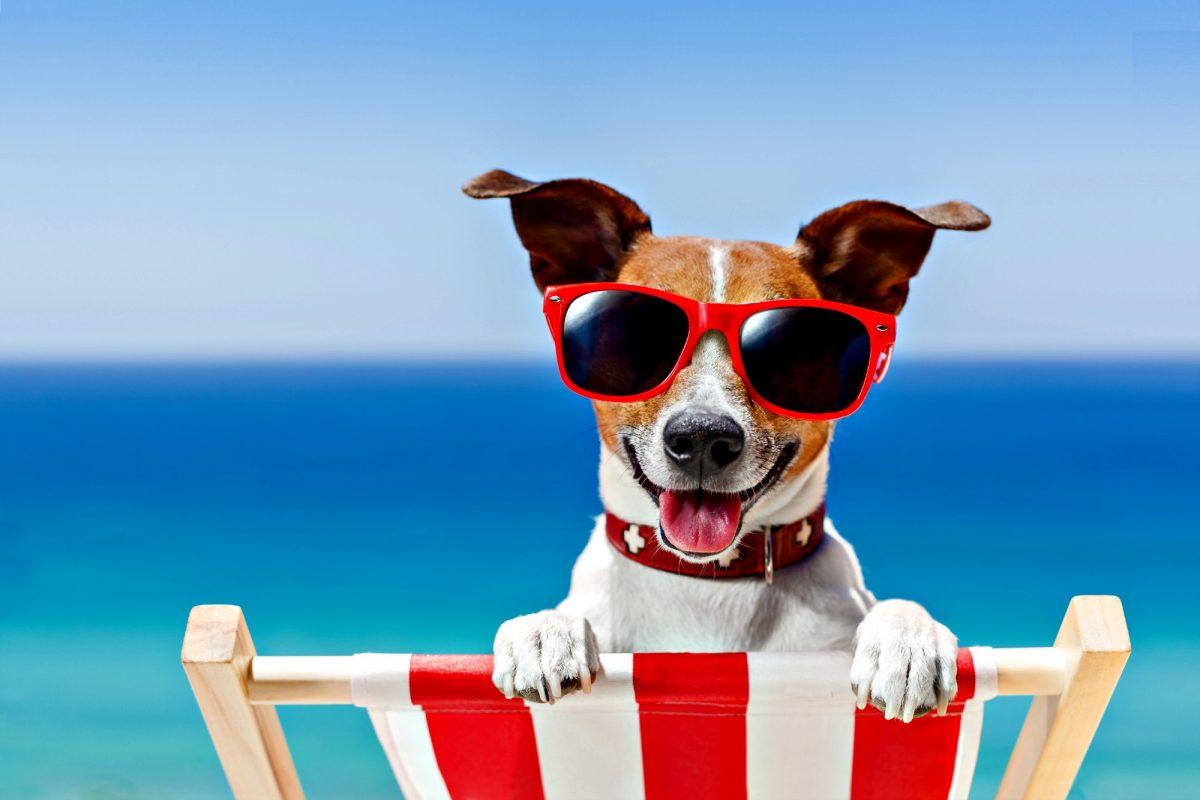 dog enjoying on the beach