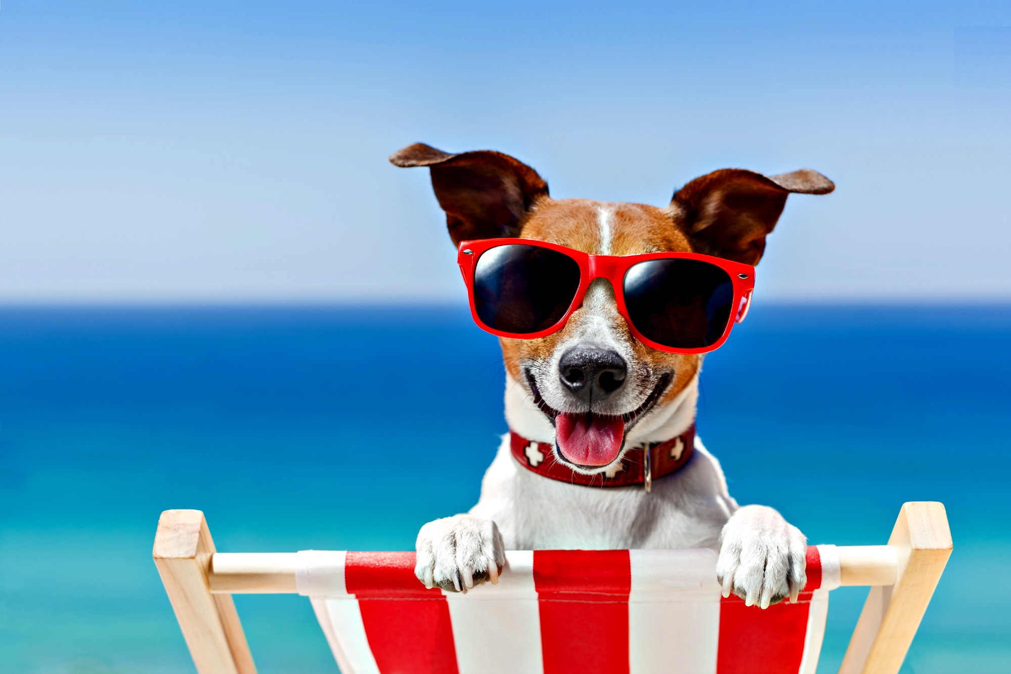 Summer Can Be A Fun Time of Year For Dogs & Owners Alike