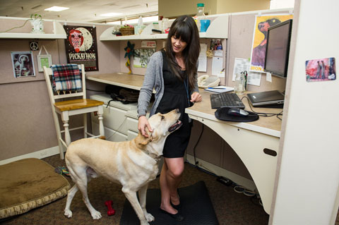 Common Benefits of Taking Your Pet to Work