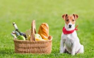 picnic with dog