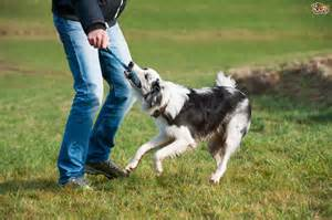 The Must Have Dog Agility Equipment to Train Your Dog