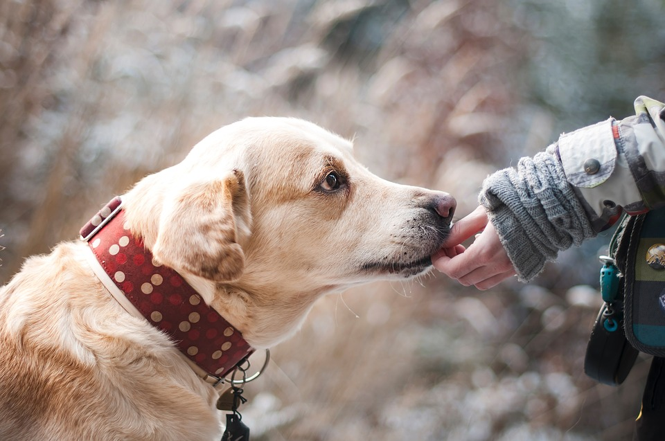 How Emotional Support Animals Help