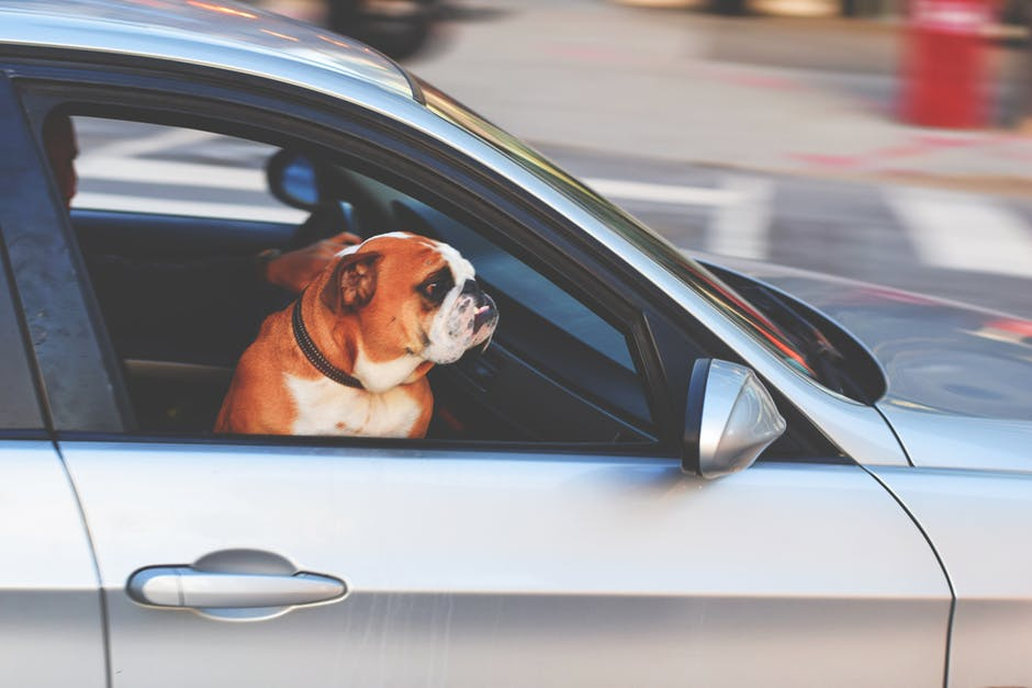 Make Sure Your Dog Remains Safe While They Are Enjoying The Open Air