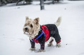 How to Keep Your Pet Safe During a Freeze?