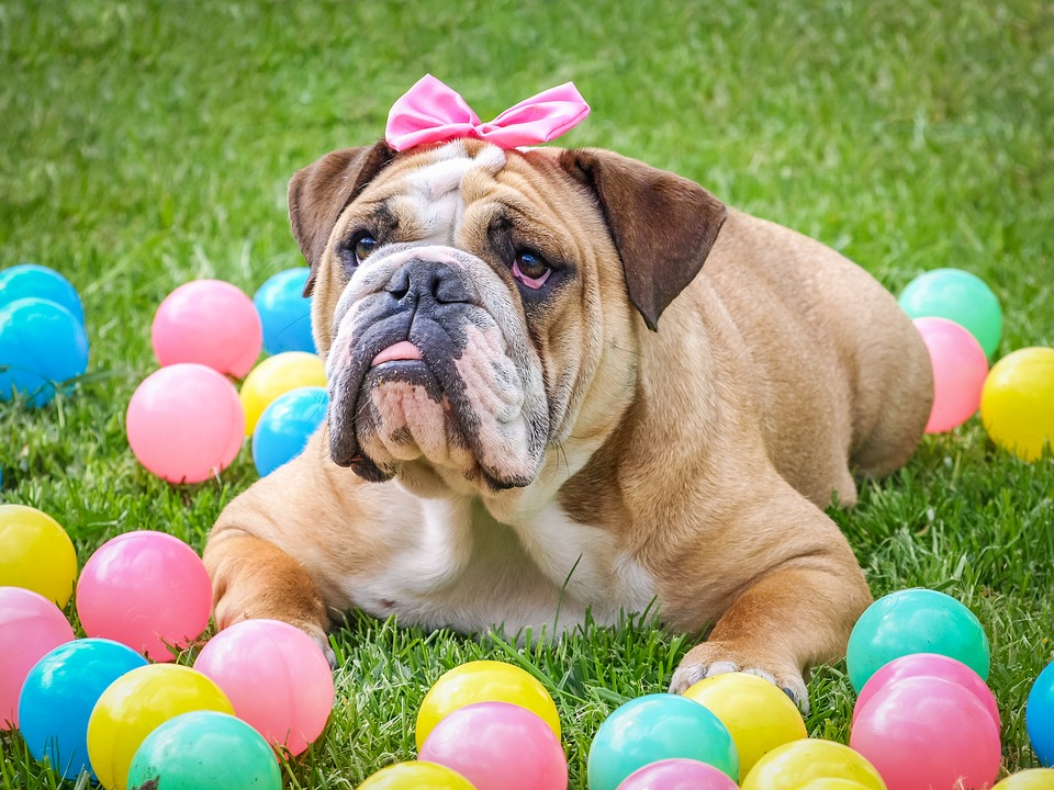 cute dog on colorful balls