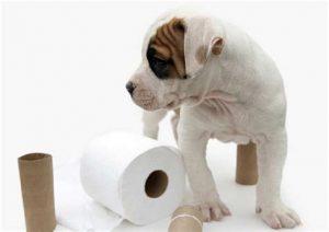 dog potty training