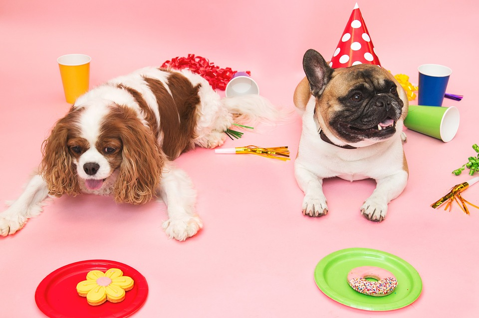 dog party with treats