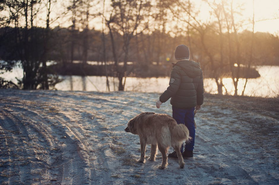 Should You Let Your Dog Play In The Snow?