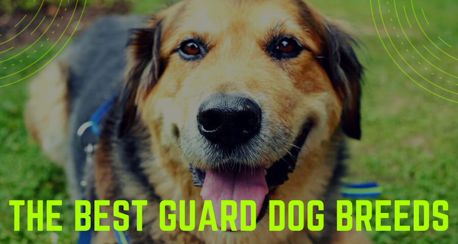 The Best Guard Dog Breeds