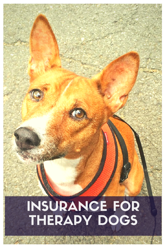 Insurance for Therapy Dogs