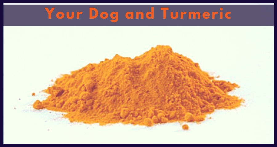 Your Dog and Turmeric