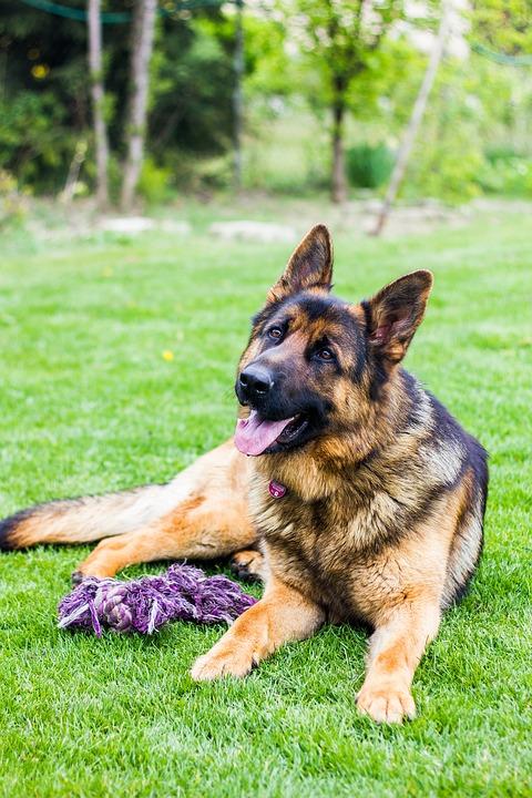 Benefits of High Fiber Dog Food