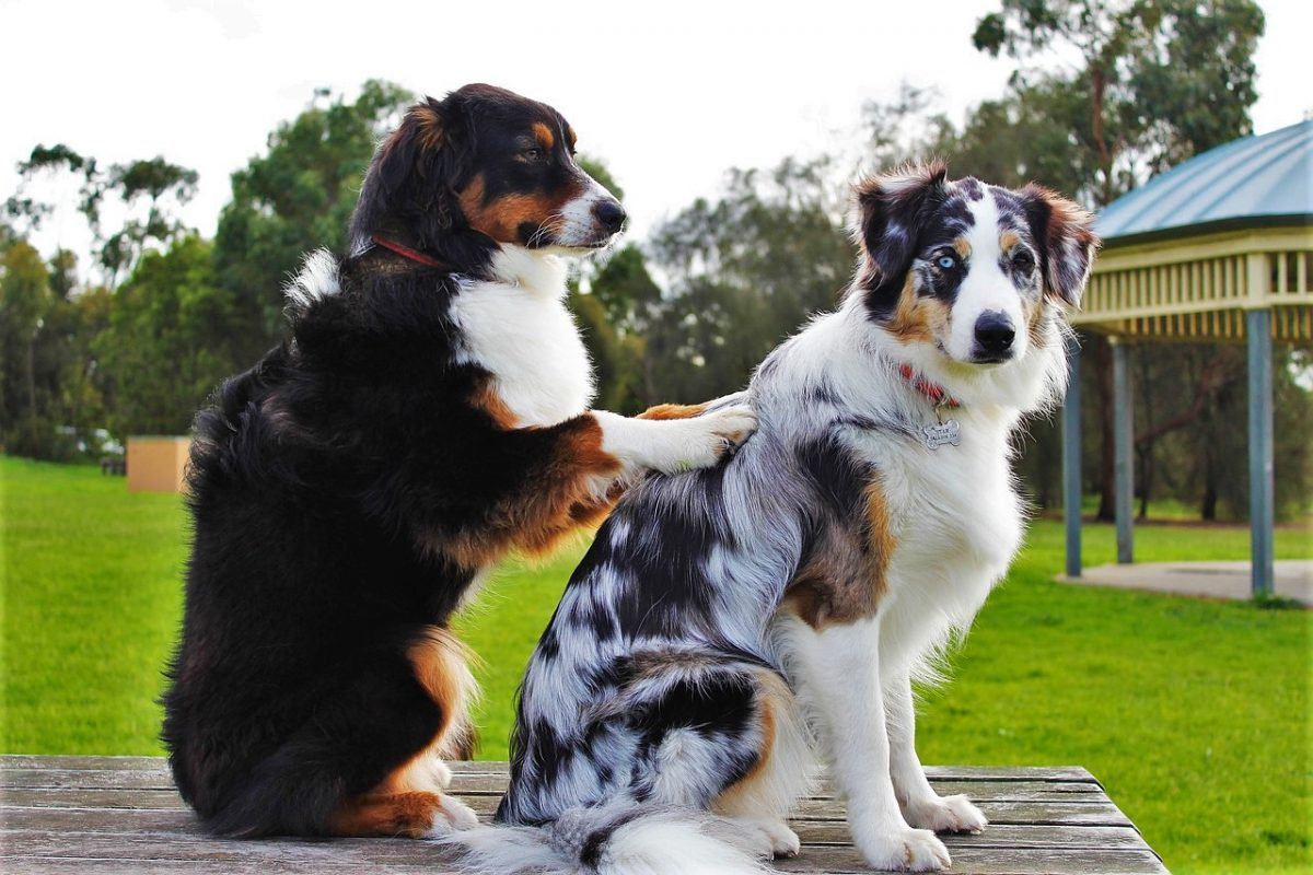dogs sitting on the table