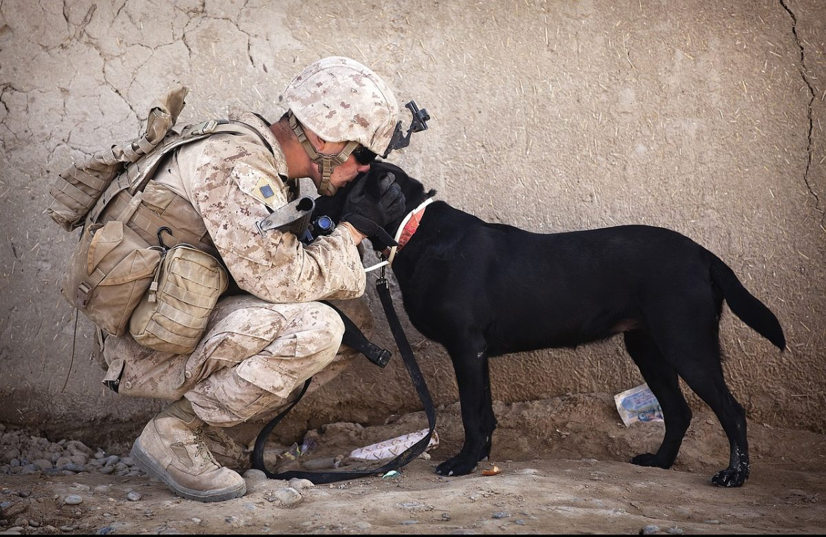 service dogs with his owner