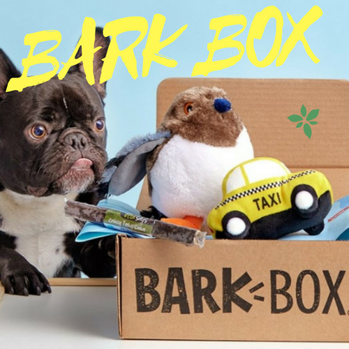 BarkBox – The Top Dog in Delivering Dog Treats