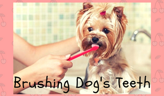Make The Process of Cleaning Easy With A Dog Bathtub