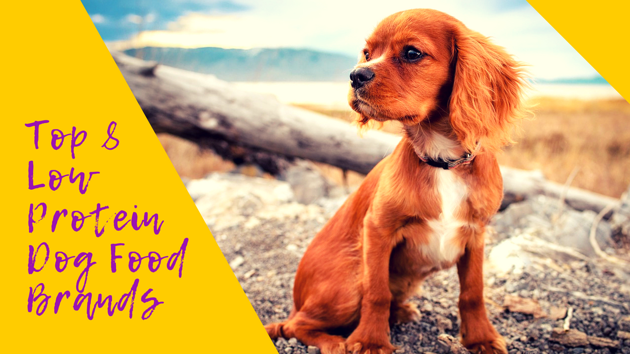 Low Protein Dog Foods The Best 8 Brands Sold Therapy Pet