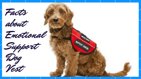 "ESA Dog Vests – There Are The ""Must Have"" Indicators"