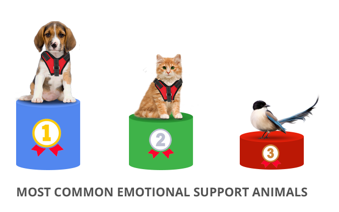 Most Common Emotional Support Animals