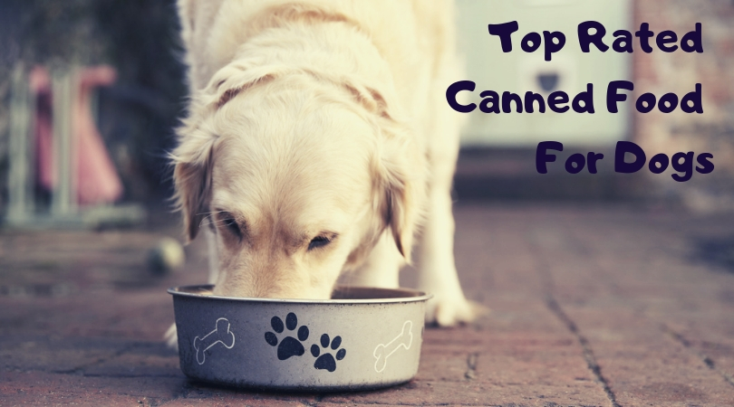 Top 10 Best Canned Dog Food Brands Therapy Pet