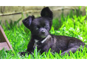 A black dog sitting on grass