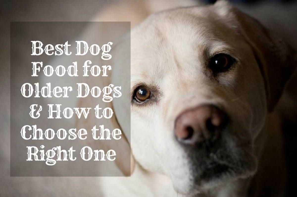 Dog-Food-for-Older-Dog