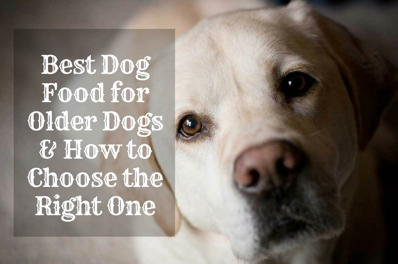 Best Dog Food For Older Dogs & How to Choose the Right One