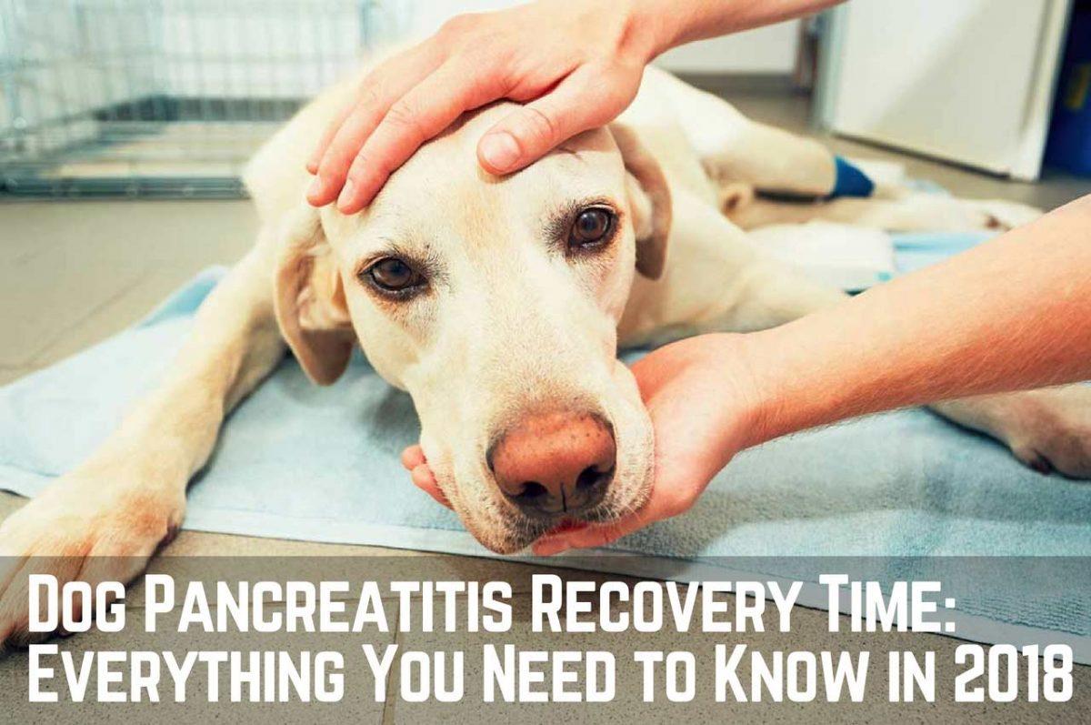 Dog-Pancreatitis-Recovery-time