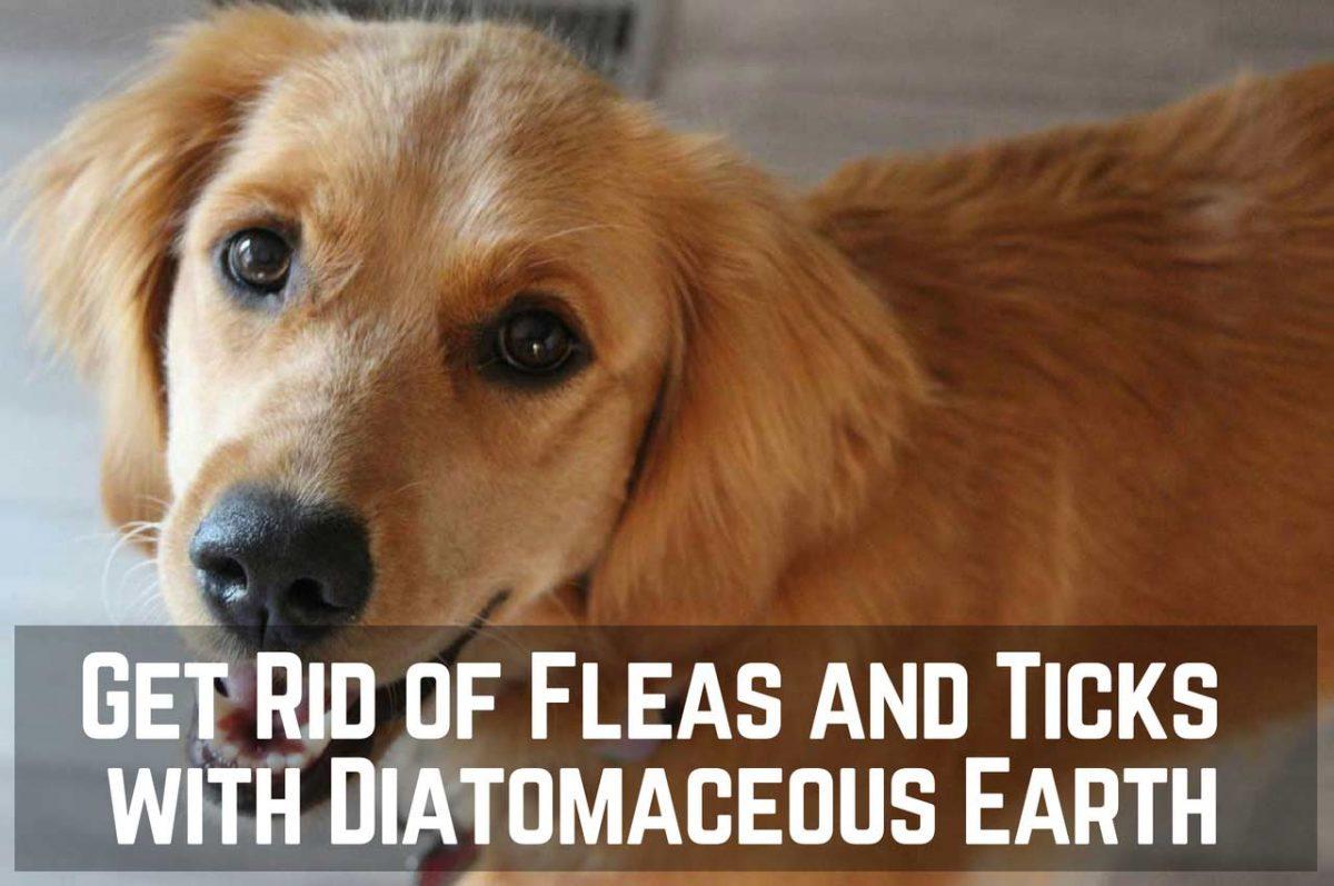 Get Rid of Fleas and Ticks