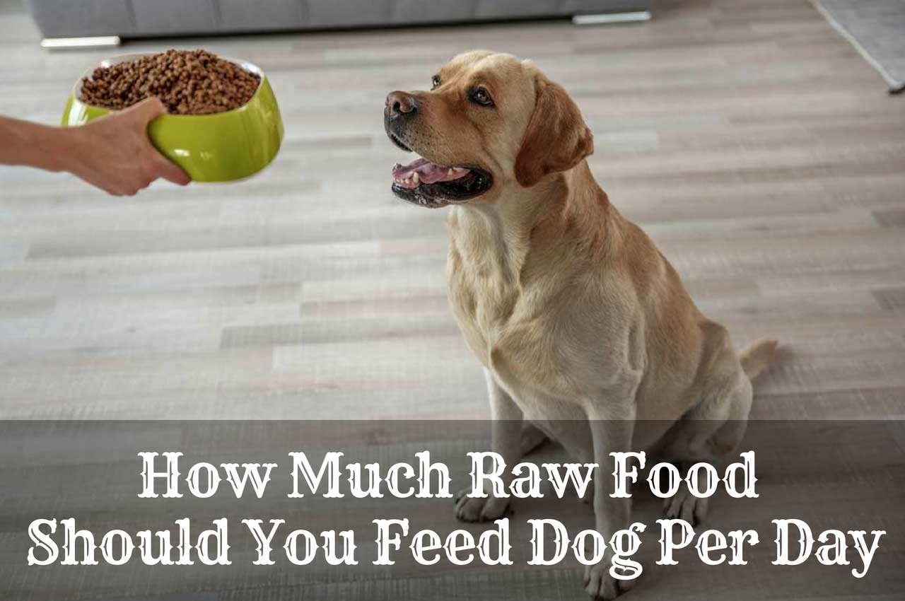 The Best Raw Dog Food Available In 2019 | Therapy Pet