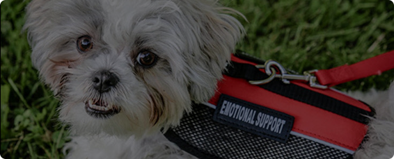Emotional Support Dog Wearing ESA Vest