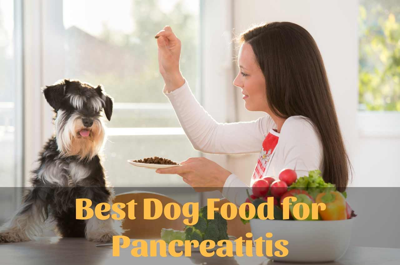 Best-Dog-Food-for-Pancreati