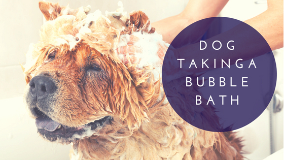 Dog Taking a Bubble Bath