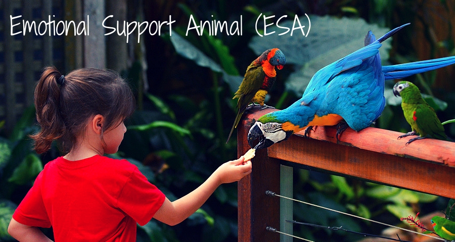 Emotional Support Animal as a companion