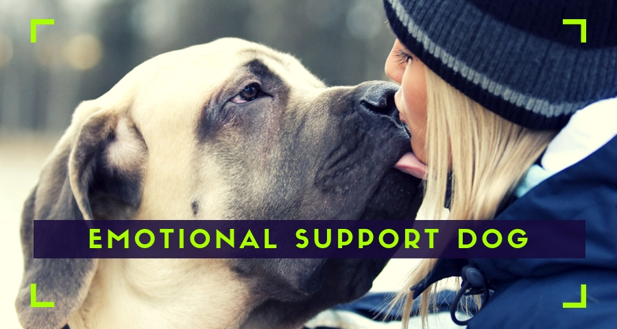 Emotional Support Dog with a person