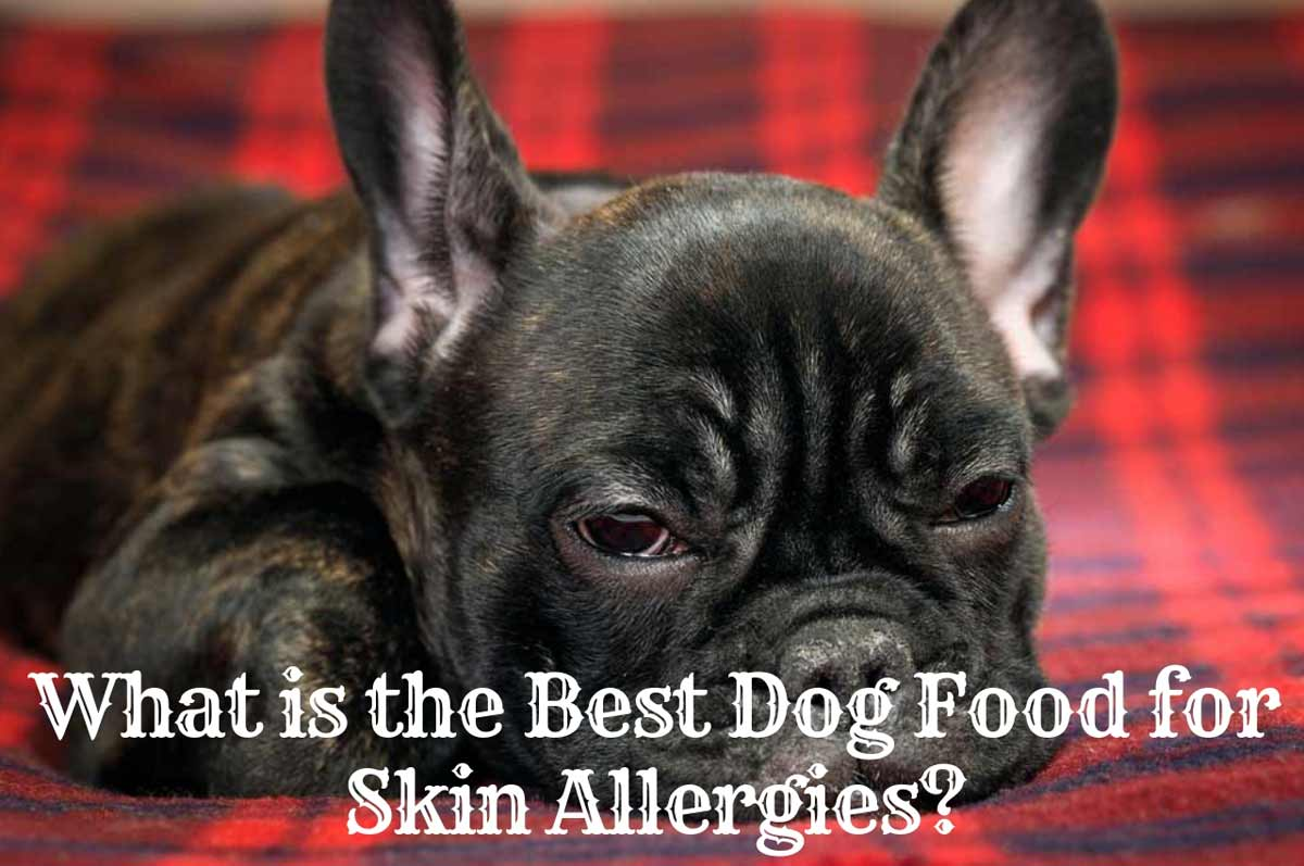 What Is The Best Dog Food For Skin Allergies Therapy Pet