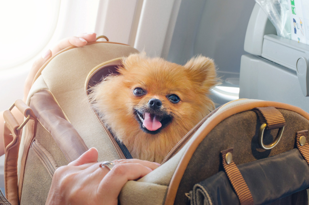 Alaska Airlines Emotional Support Animal Policy 1
