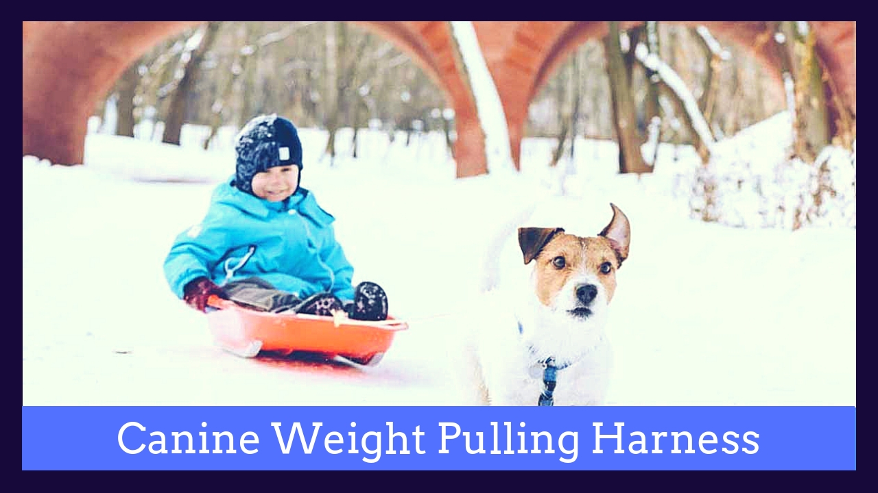 Canine Harness For Pulling Weight