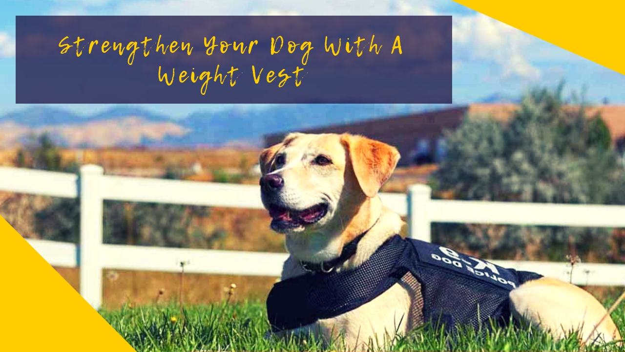 Strengthen Your Dog With A Weight Vest