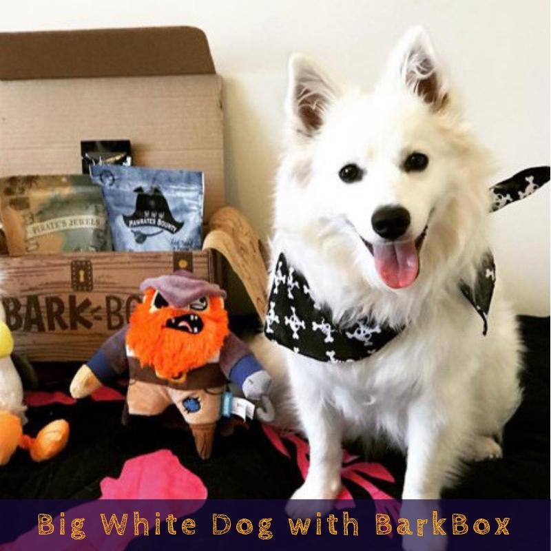 Big White Dog with BarkBox