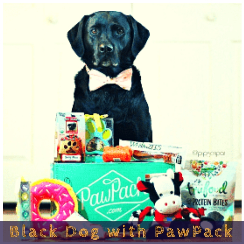 Black Dog with PawPack