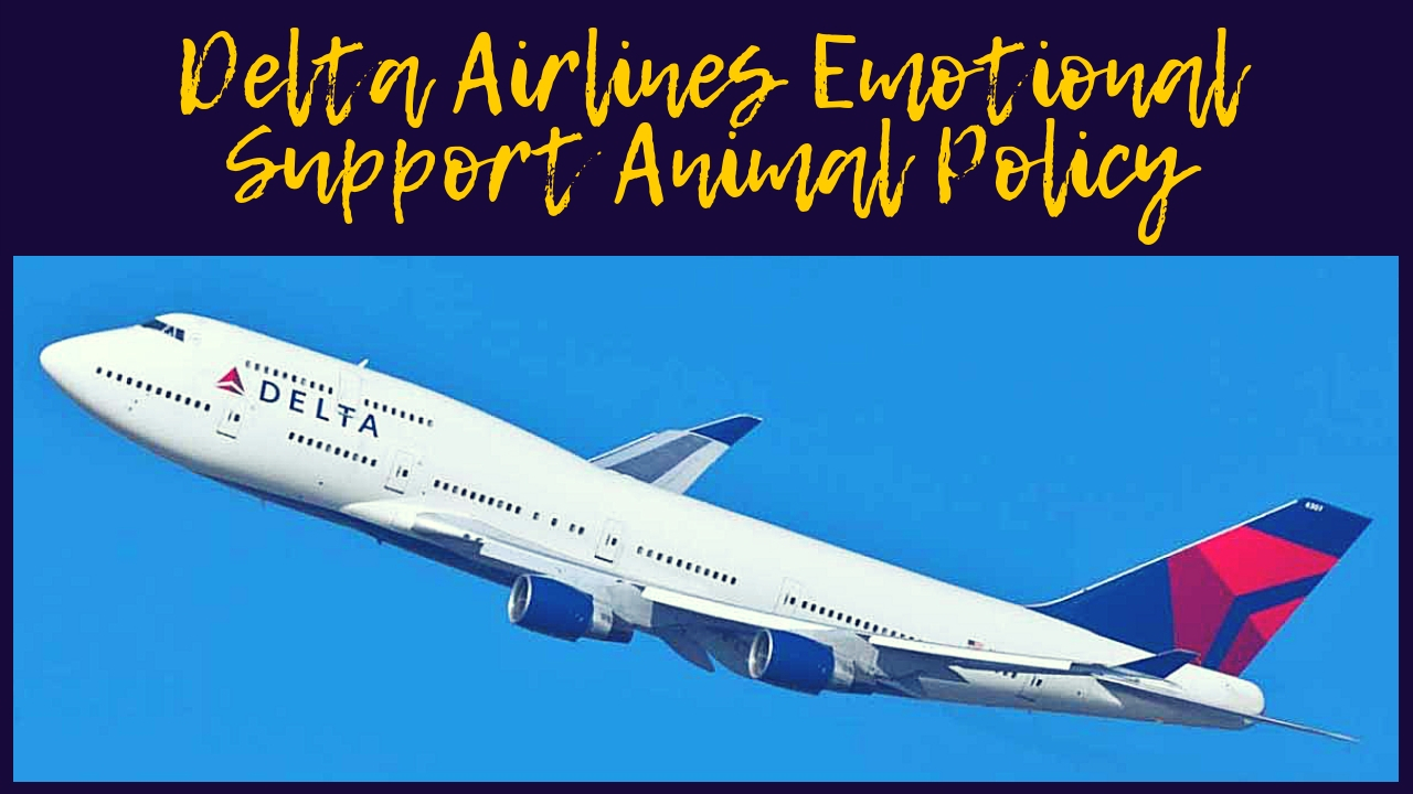 Delta Airlines Emotional Support Animal Policy